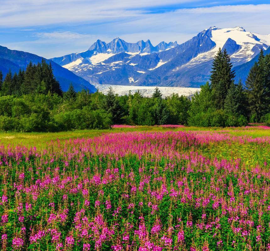 Ultimate Alaska & the Yukon